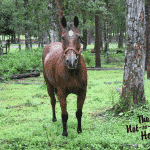 How I Acquired Another Horse