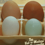 Why are eggs different colors?