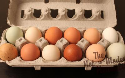 Why Are Chicken Eggs Different Colors?