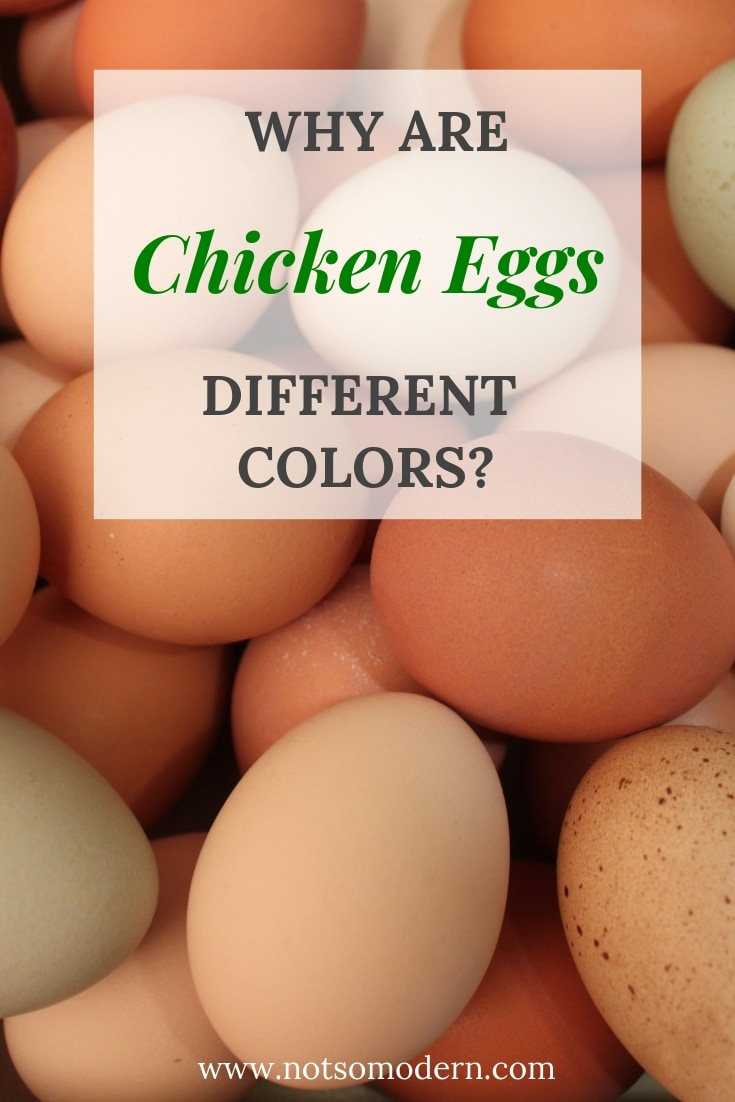 Pile of chicken eggs in various shades - Why Are Chicken Eggs Different Colors?