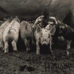 Farm Life and Field Medicine