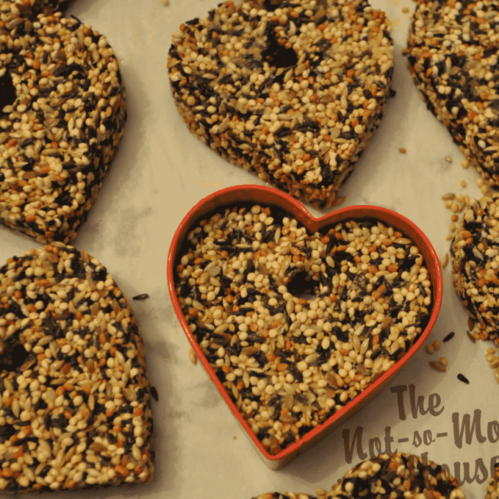 bird seed ornaments made with a red heart shaped cookie cutter