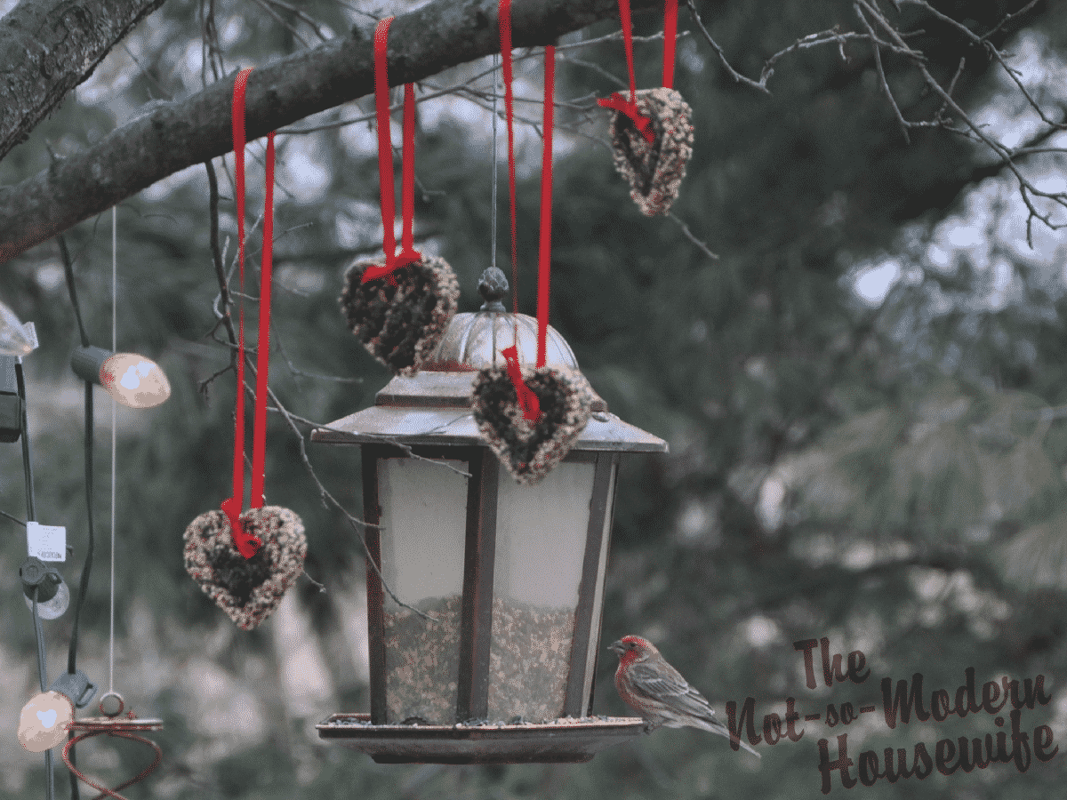 Hanging Bird Seed Ornaments