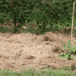 Low-Maintenance No-Till Lasagna Gardening