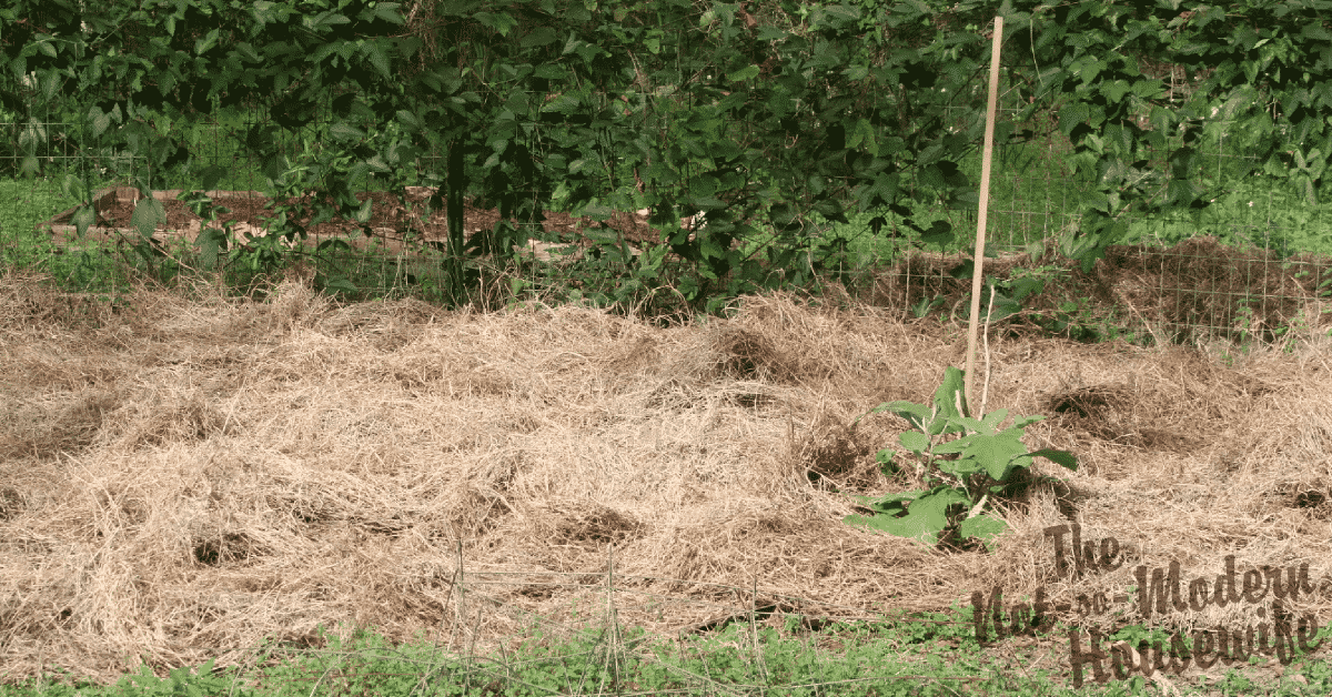 No-Till Low-Maintenance Gardening