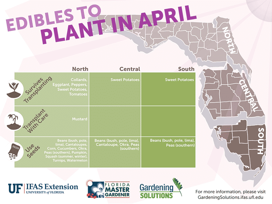 Florida Edibles to Plant in April