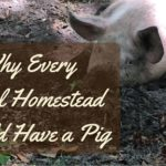 Why Every Rural Homestead Should Have a Pig