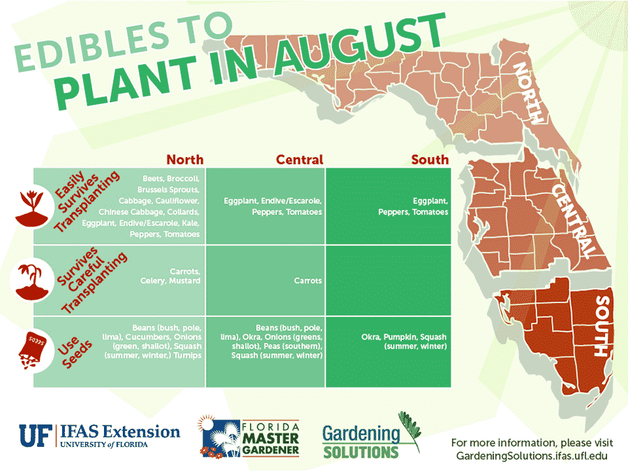 Florida Edibles to Plant in August