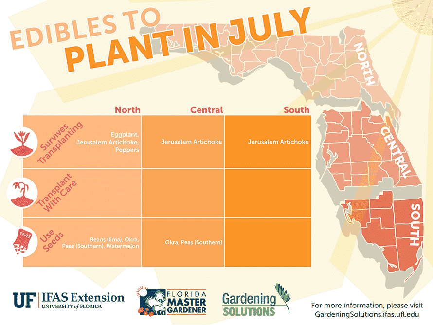 Florida Edibles to Plant in July