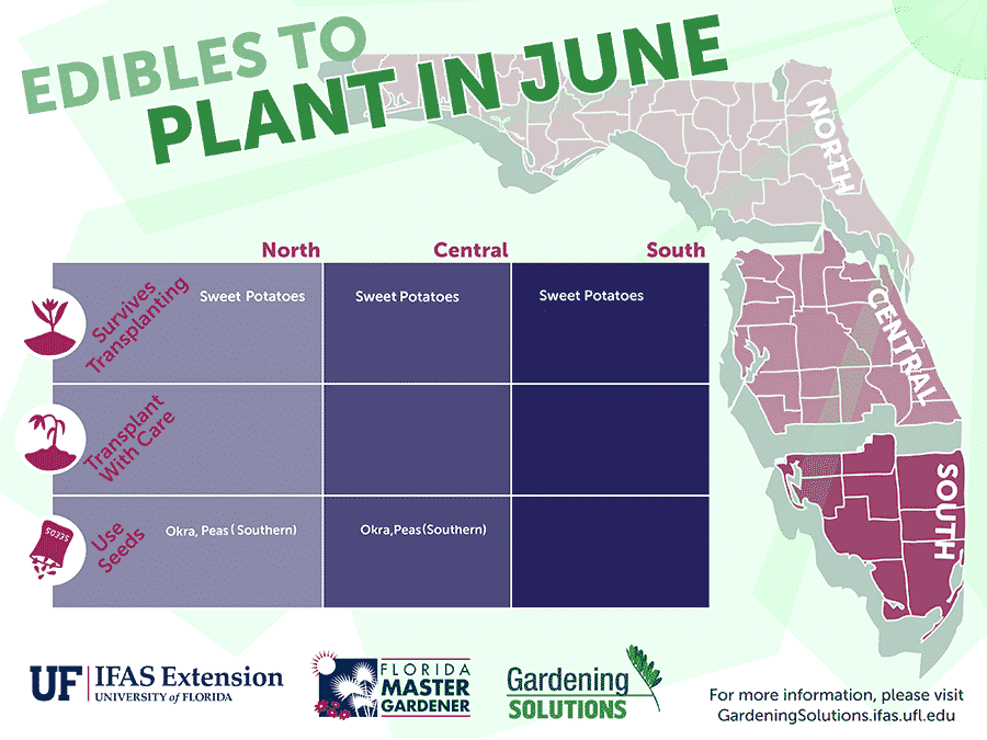 Florida Edibles to Plant in June