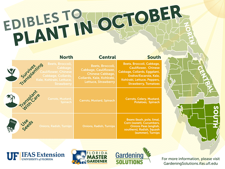 Florida Edibles to Plant in October
