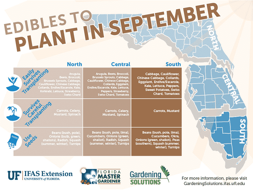 Florida Edibles to Plant in September