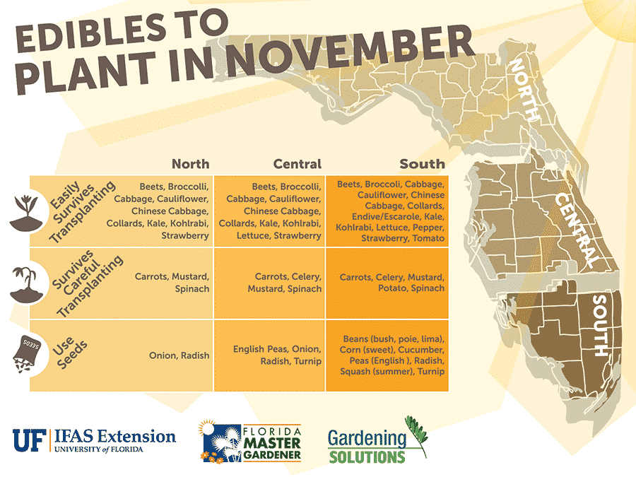 Florida Edibles to Plant in November