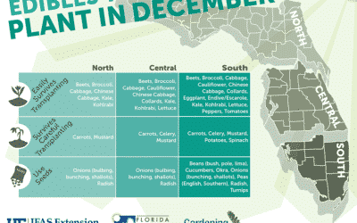 Florida Edibles to Plant in December