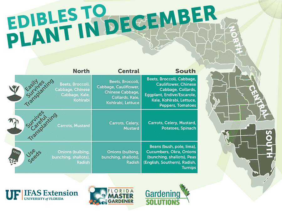 Florida Edibles to Plant in December - The Not So Modern Housewife
