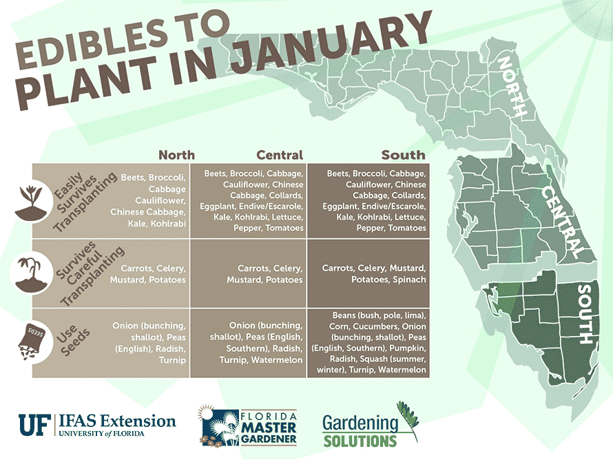 Florida Edibles to Plant in January