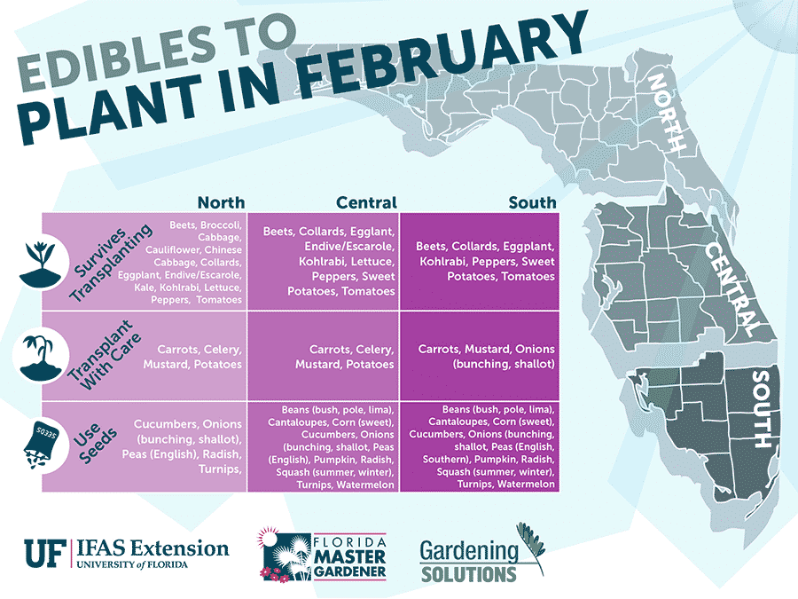 Florida Edibles to Plant in February