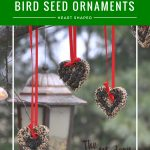 outdoors bird seed ornaments with Nyjer birdseed hung with red ribbons