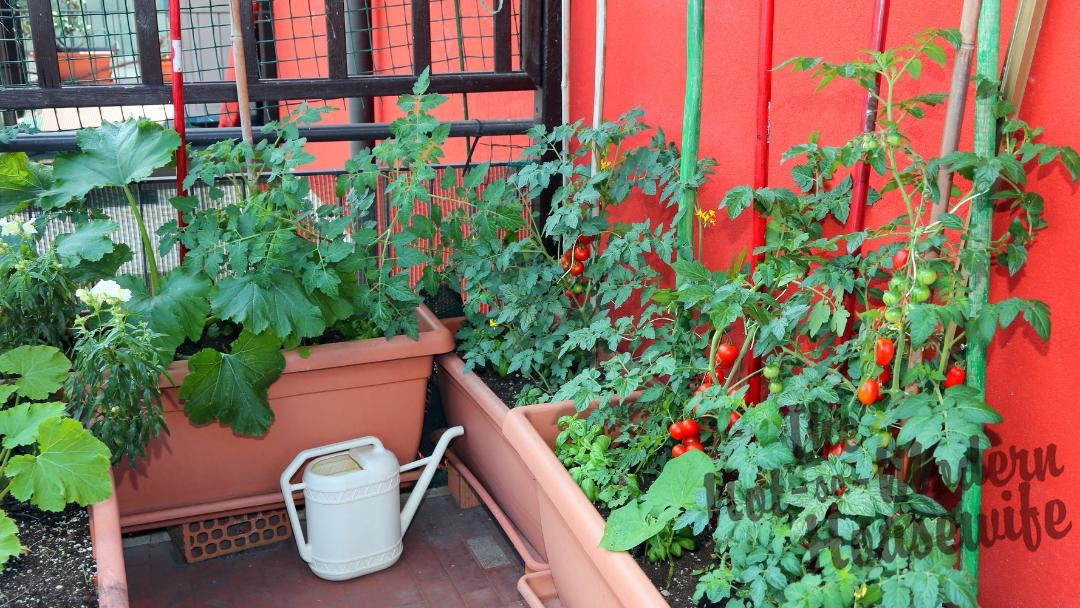 10 Best Planters for Your Container Garden