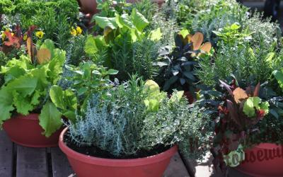 How to Select Containers for Your Vegetable Garden
