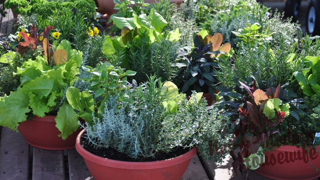 Select Containers for Your Vegetable Garden