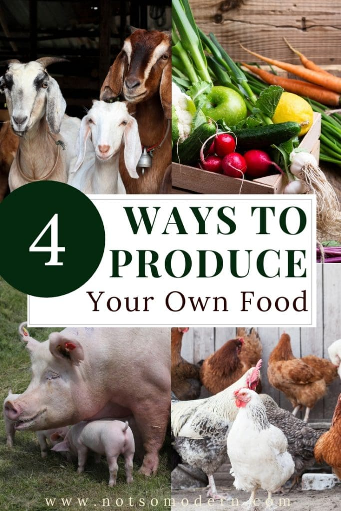 4 Ways to Produce Your Own Food
