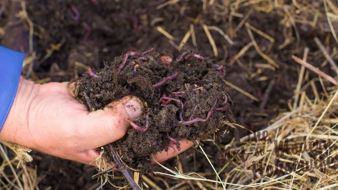 Composting 101 – How to Start Composting