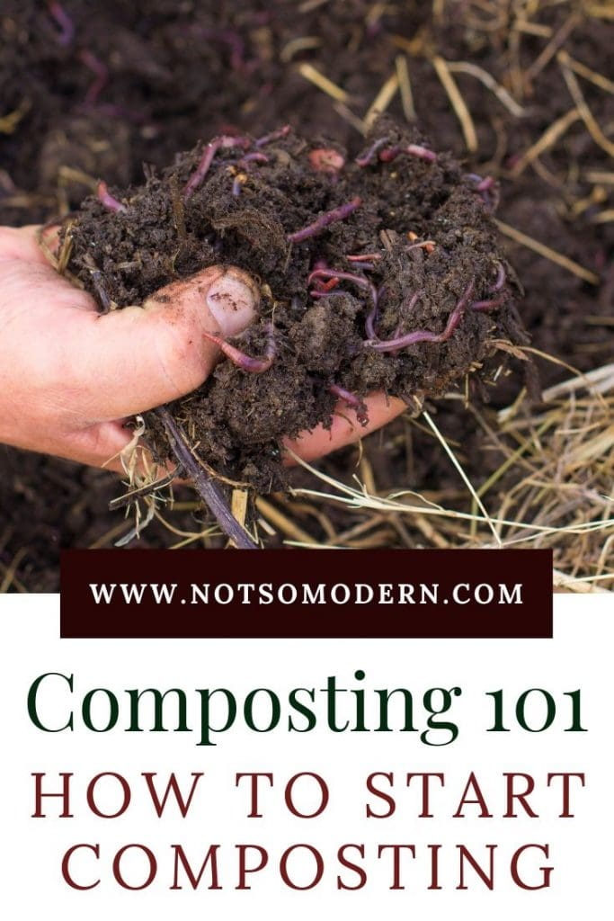 Worms in compost - Composting 101 - How to Start Composting