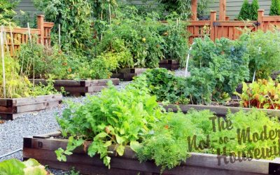 5 Things You Can Do NOW To Plan Your Vegetable Garden
