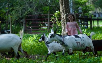 How to Get Farm Chores Done When You Have Small Children