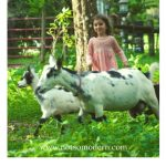 young girl with goats in grass - farm chores with little kids
