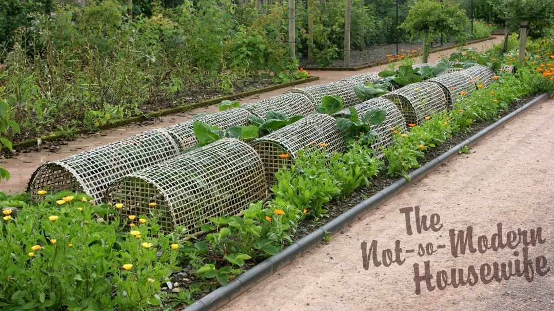 organic pest control - row covers - companion planting