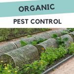 6 easy steps to organic pest control - organic garden with row covers