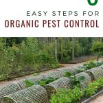 6 Easy Steps for Organic Pest Control - garden with row covers