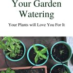 Automate your garden watering - irrigation tube watering plants in containers
