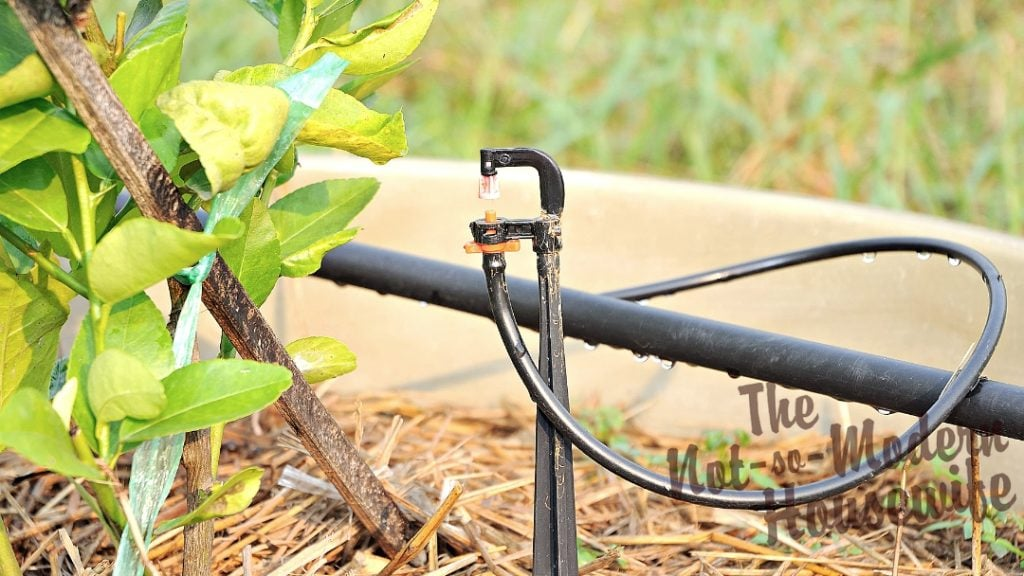 Micro sprayers are tiny sprinklers that can be placed in potted plants. They produce a fan of water that is sprayed across the soil in your container so a wider area is covered at one time, while also preventing water loss and leaf burn by spraying the plant foliage.
