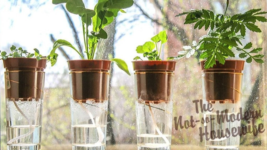 Wick watering is a great way to keep your indoor potted plants watered on a daily basis or when you go on vacation.