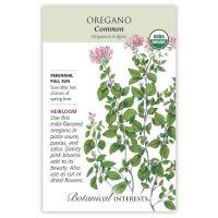Common Oregano Seeds - Organic, Heirloom