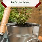Create your own Herb Garden - Perfect for Indoors - small thyme herb plant growing in a container garden